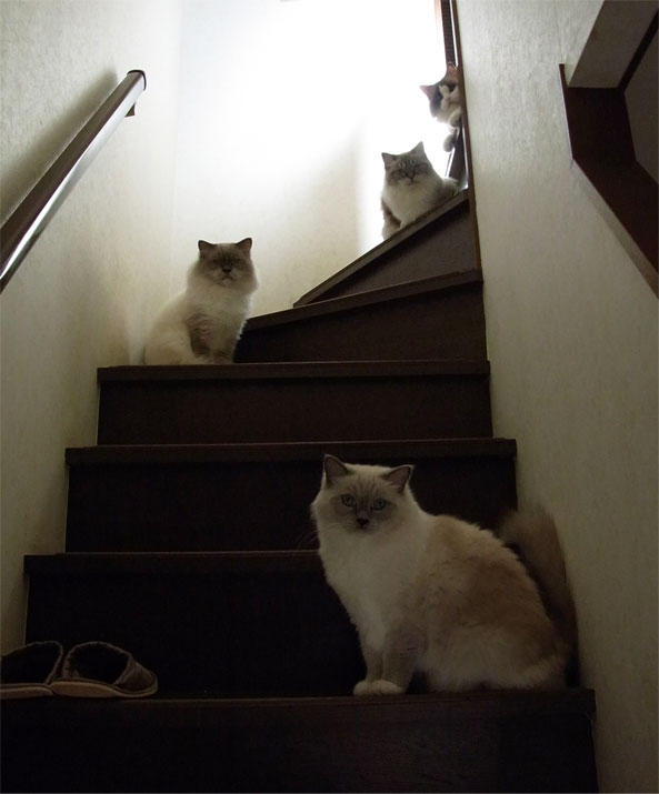 4cats_2